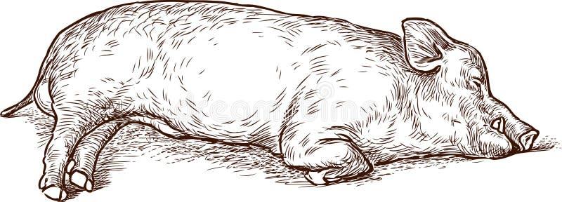 Sketch of a sleeping swine royalty free illustration
