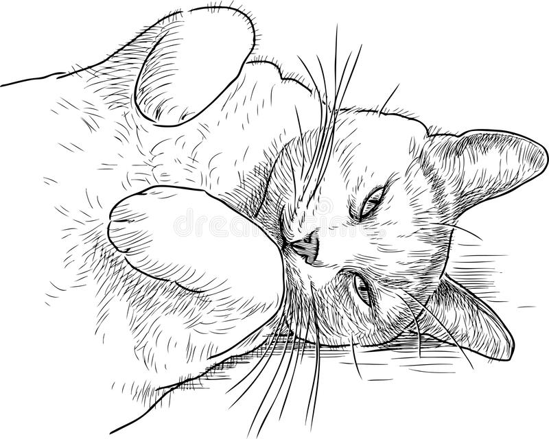 Sketch of a sleepy lazy cat. Vector drawing of a domestic lazy cat stock illustration
