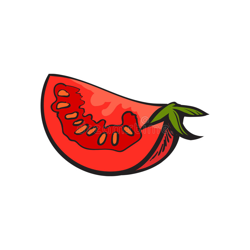 Sketch style drawing of ripe red tomato slice. Vector illustration isolated on white background. Quarter of ripe tomato, side view, hand drawn illustration vector illustration