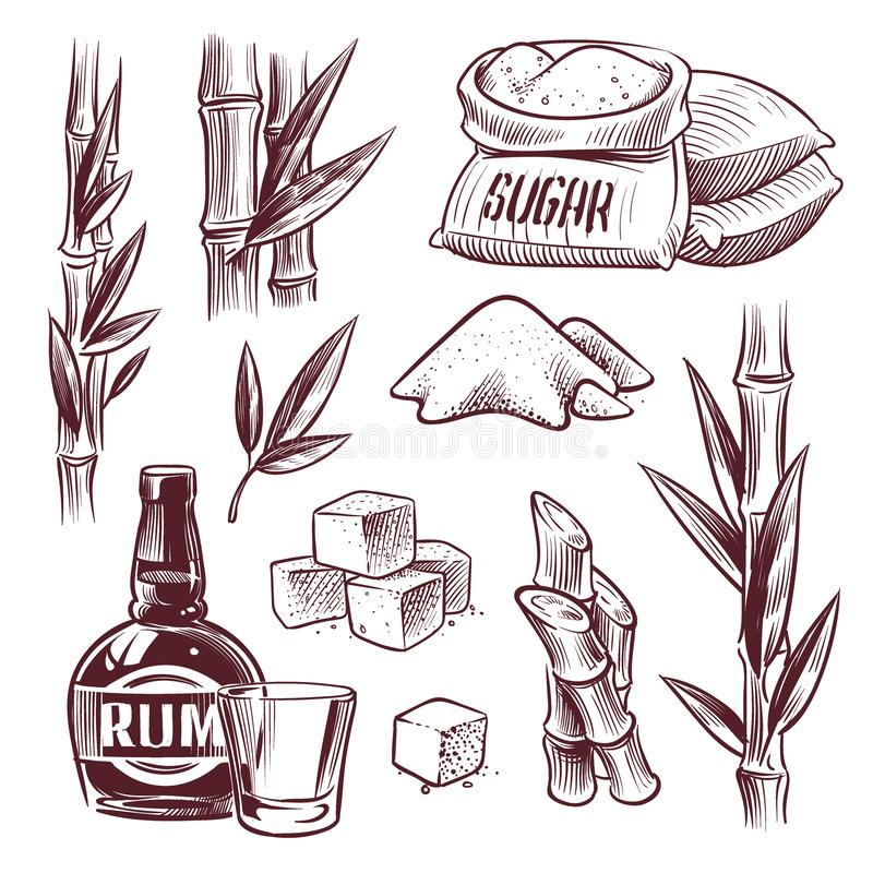 Sketch sugar cane. Sugarcane sweet leaf, sugar plant stalks, rum drink glass and bottle. Sugar manufacturing hand drawn. Vector set vector illustration