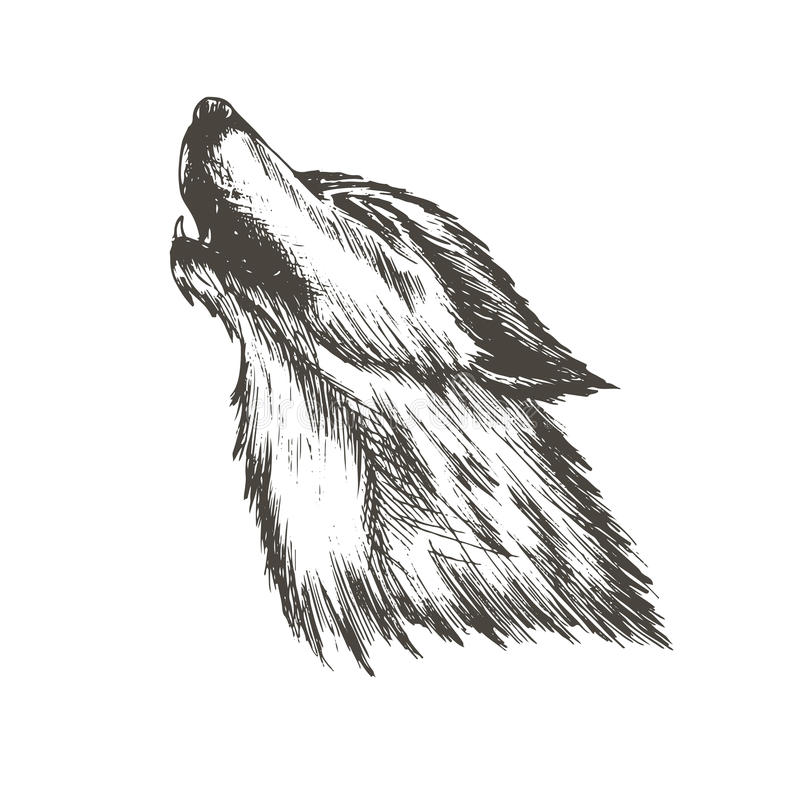 Sketch vector illustration of wolf royalty free stock image