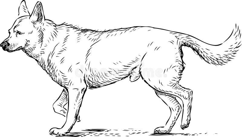 Sketch of a walking guard dog vector illustration