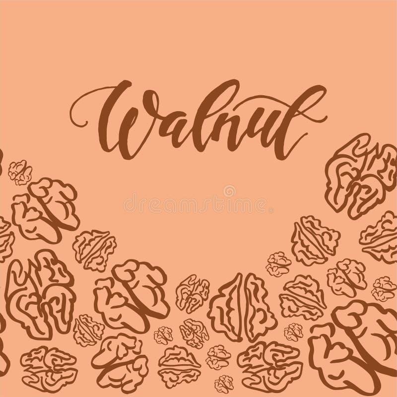 Sketch walnut pattern on light background. Seamless pattern with dried walnuts on light background. Cute doodle illustration stock illustration