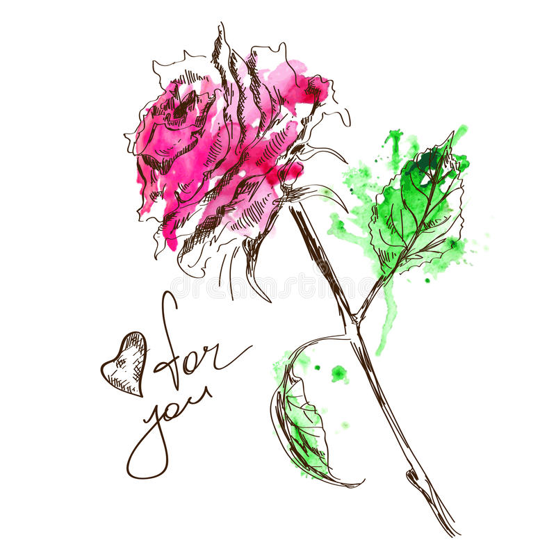 Sketch and watercolor rose stock illustration