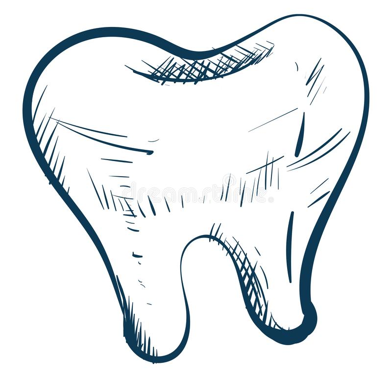Sketch drawing of a white tooth , vector or color illustration. Sketch A white tooth over white tooth isolated on white background viewed from the front, vector royalty free illustration