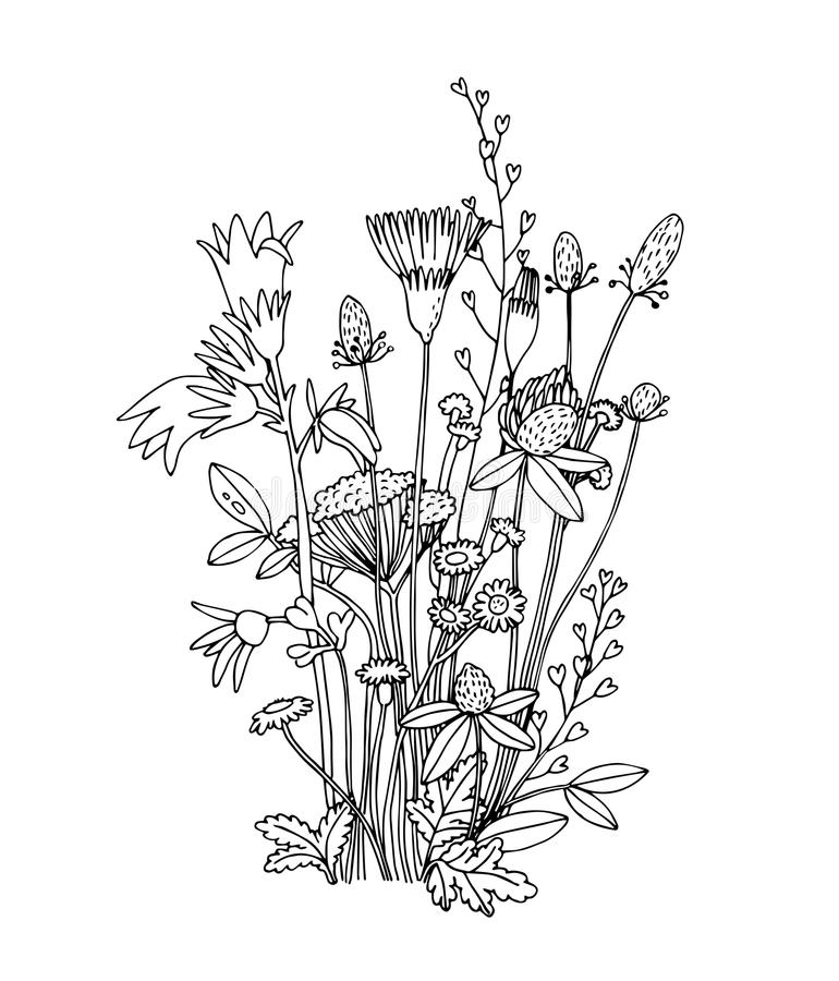 Wildflower Line Drawing : Sketch of the wildflowers on a white background stock