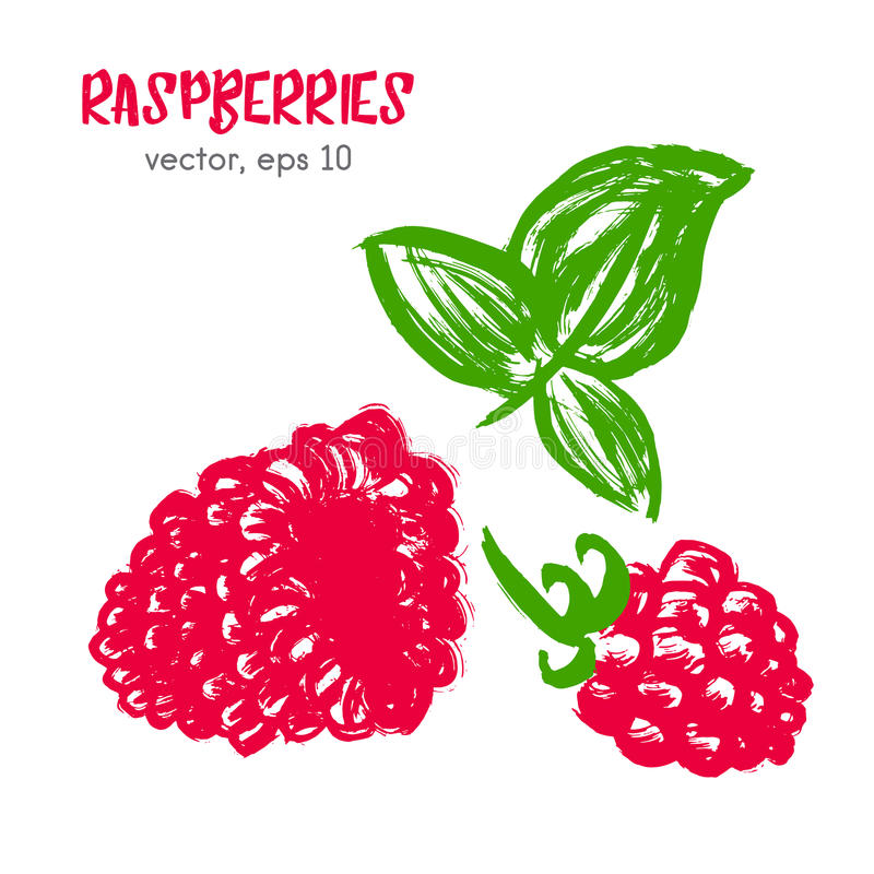 Sketched fruit illustration of raspberry. royalty free stock photos