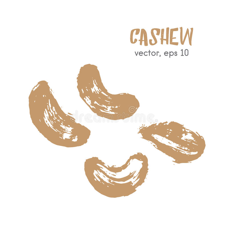 Sketched illustration of cashew nut. royalty free stock photo