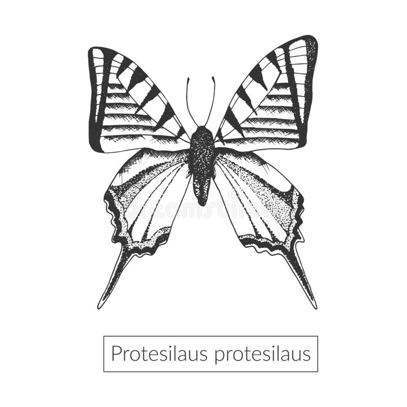 Sketched macro butterfly illustration stock illustration