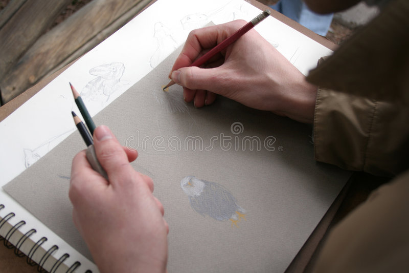 Download Sketches stock illustration. Illustration of paint, bird - 537918