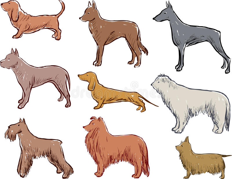 Sketches of the different dogs breeds royalty free illustration