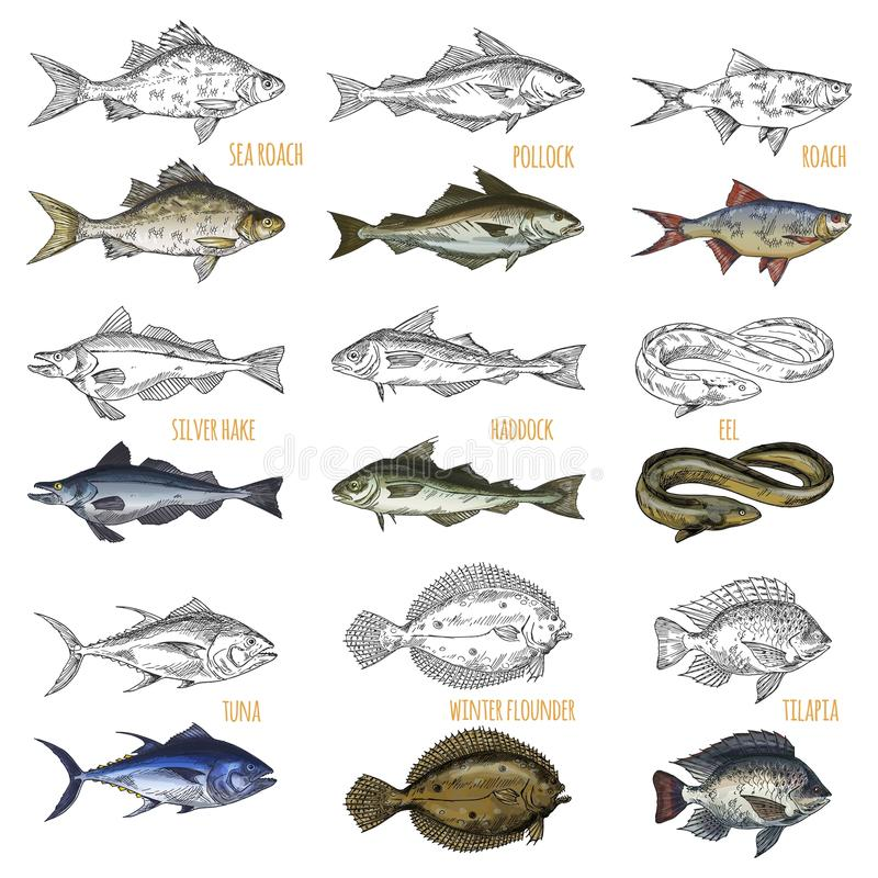 Set of isolated sea or ocean fish side view stock vector for Ocean fish species