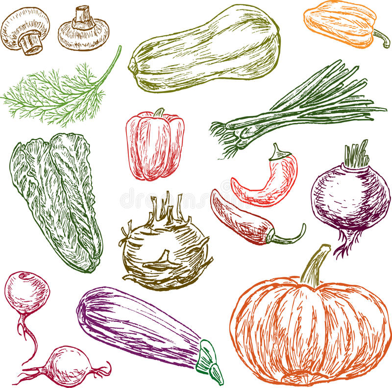 Free Sketches Of The Different Ripe Vegetables Royalty Free Stock Images - 84609649