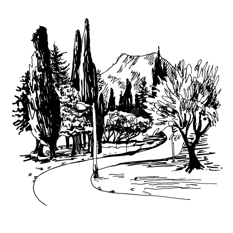 Sketching of park alley view with trees cypress and mountain. Black and white sketching of park alley view with trees cypress and mountain in Budva Riviera vector illustration
