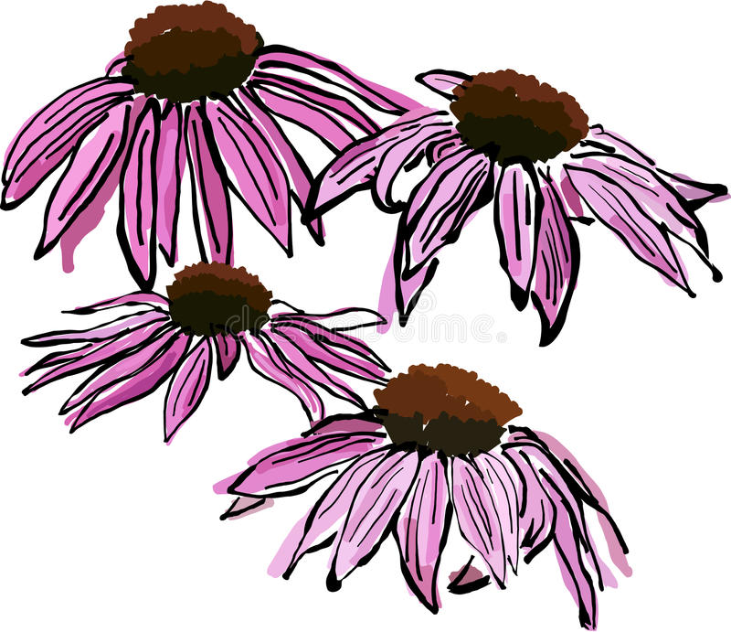 Download Sketchy Echinacea flowers stock vector. Illustration of sketchy - 21232596