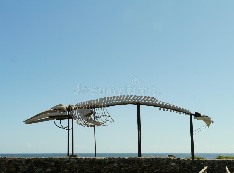 Sketeton de la ballena en Salinas del Carmen fotos de archivo