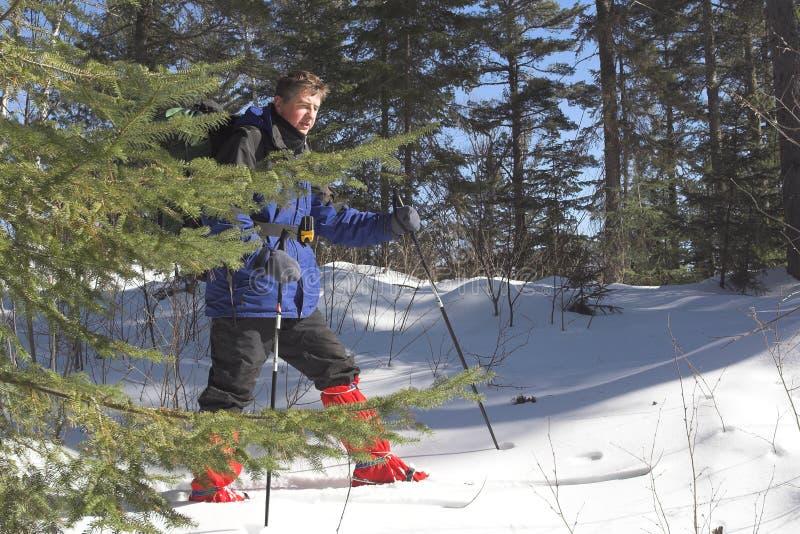 Skiër in taiga royalty-vrije stock afbeeldingen