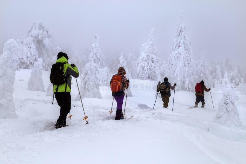Skiërs in de Bergen stock afbeeldingen