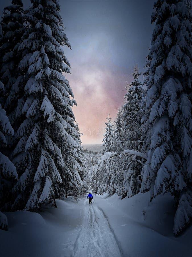 Ski dans la forêt photographie stock