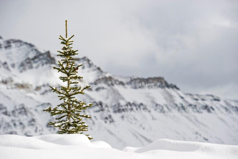 ski de ressource de Lake Louise photo libre de droits