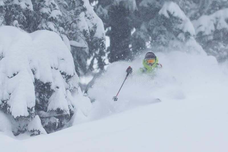 Ski en poudre photos libres de droits