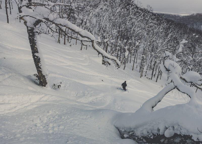 Ski fahrendes tiefes Pulver des Skifahrers im schneebedeckten Wald lizenzfreie stockfotos