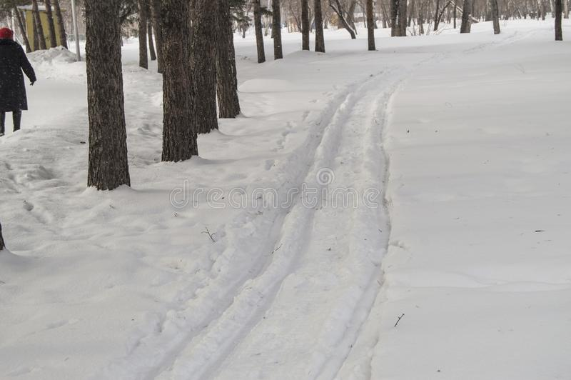 Ski in the fresh snow in the winter Park among the trees, people walk along the ski trail, the concept of winter outdoor. Activities, cold, track, snowfall royalty free stock image