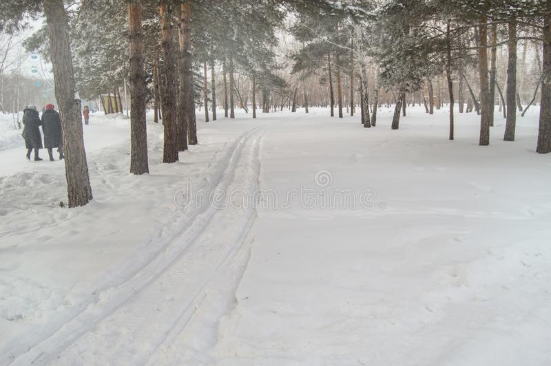 Ski in the fresh snow in the winter Park among the trees, people walk along the ski trail, the concept of winter outdoor. Activities, cold, track, snowfall royalty free stock photo