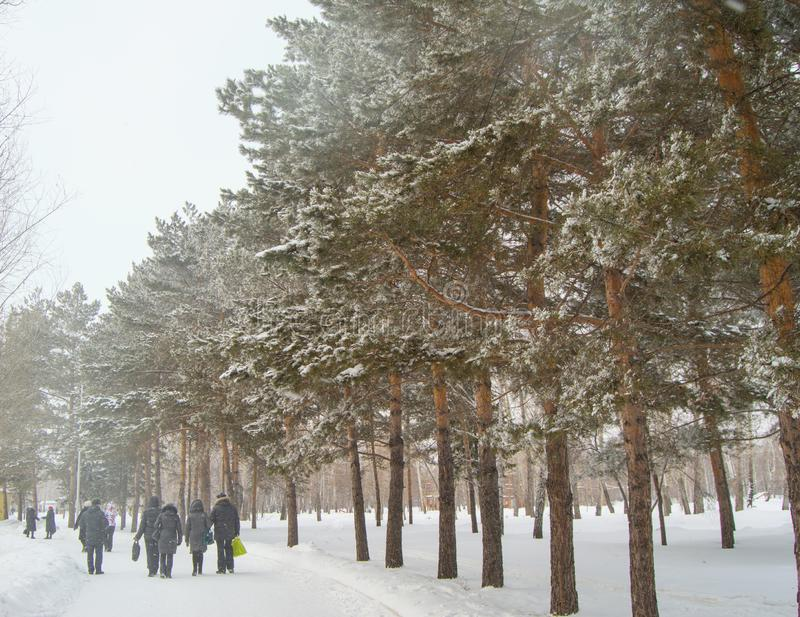 Ski in the fresh snow in the winter Park among the trees, people walk along the ski trail, the concept of winter outdoor. Activities, cold, track, snowfall stock photo
