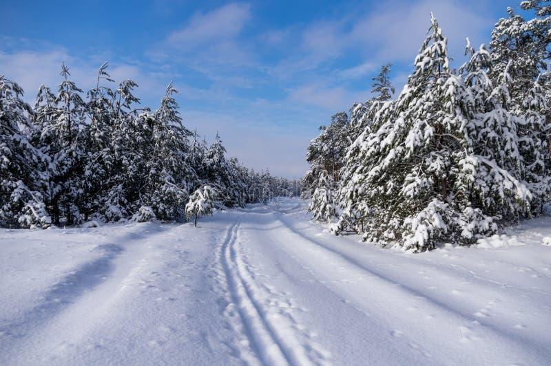 Ski in het de winterbos dat in werking wordt gesteld stock foto