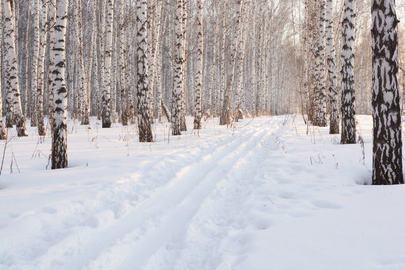 Ski in het de winterbosje royalty-vrije stock foto's