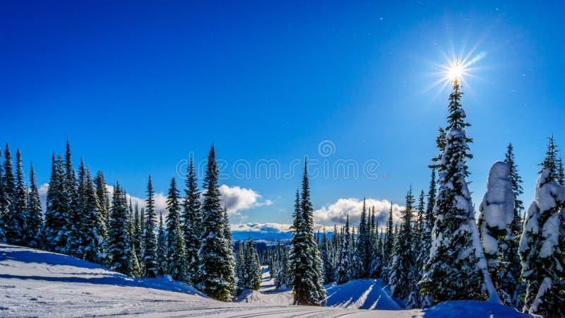 Ski Hills på monteringen Morrisey på solen når en höjdpunkt byn med solen i trädöverkant arkivfoton