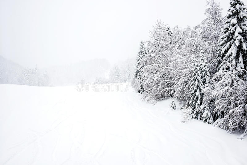 Ski neigt sich, Koniferenwald in 'Kolasin 1450 stockfoto