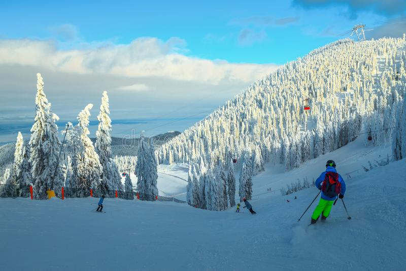 Ski-ort med skidåkare och snöpsträd, Transylvanien, Rumänien royaltyfri fotografi