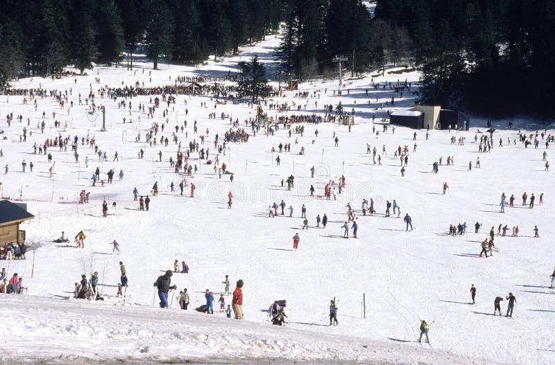 Ski populaire photo stock