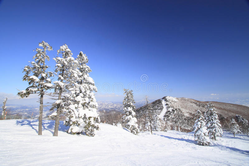 Download Ski run stock photo. Image of winter, security, region - 22453030