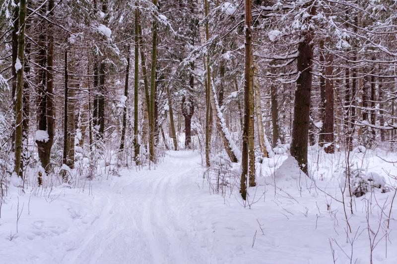 Ski run in the winter forest royalty free stock images
