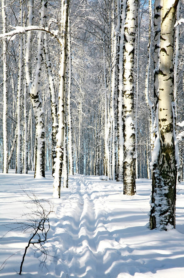 Ski run in winter forest in sunlight stock photography