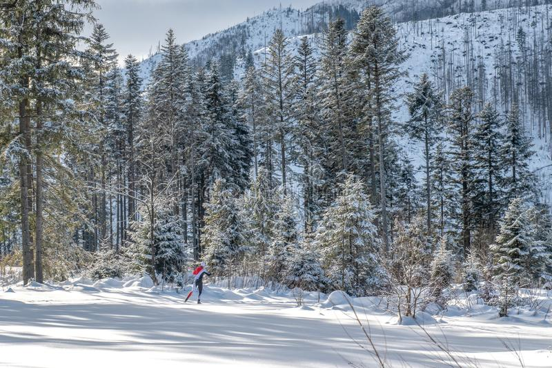 Ski runner on the route of a race running through a snowy forest royalty free stock images
