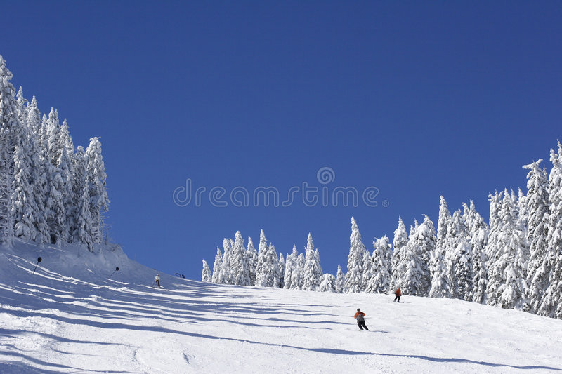 Ski slope on mountain side. Ski slope on pine covered mountain side royalty free stock photography
