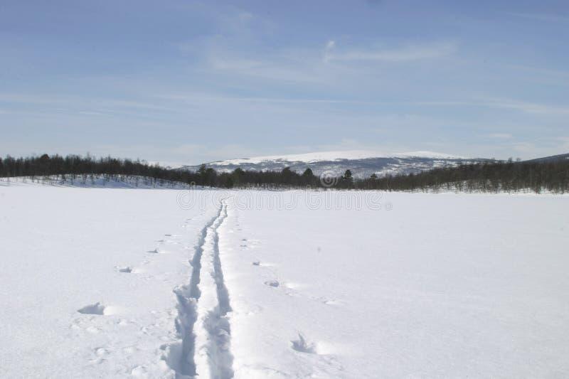 Ski-Spur lizenzfreie stockfotografie