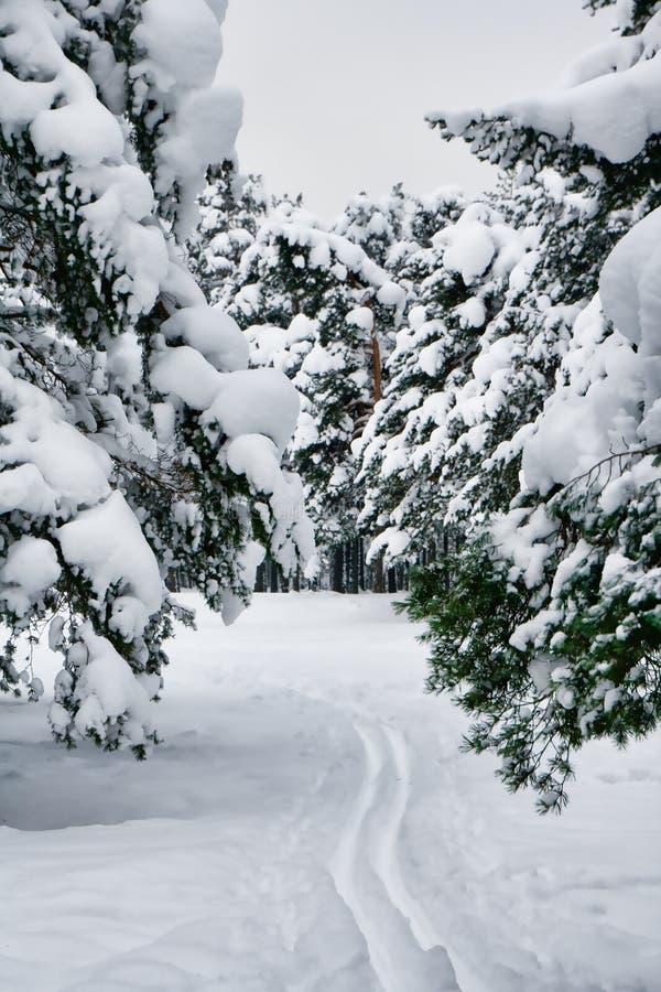 Ski-Spuren lizenzfreies stockbild