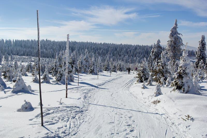 Ski Track campestre immagini stock libere da diritti