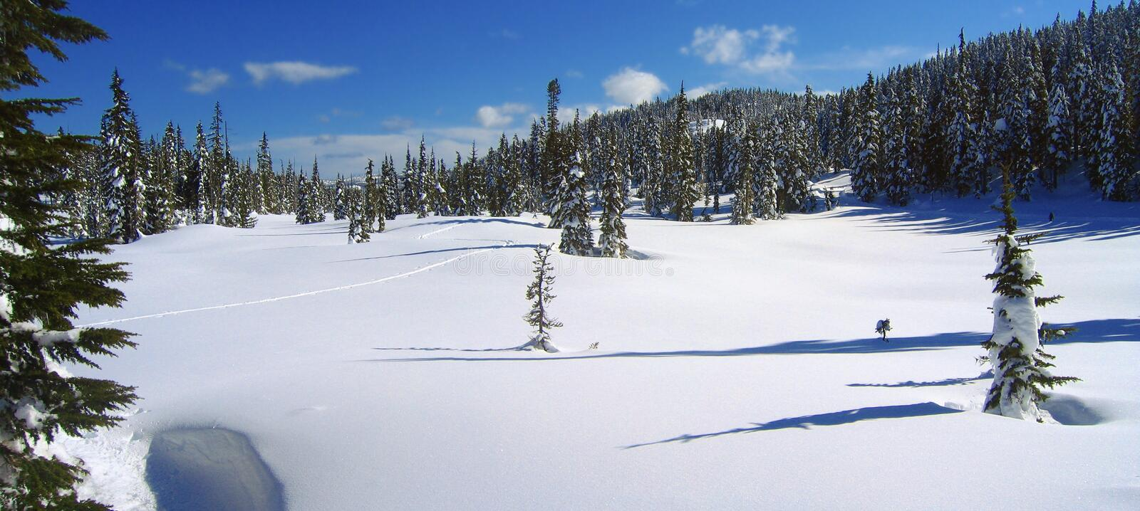 Ski Track in Paradise Meadows, Forbidden Plateau, Strathcona Provincial Park, Vancouver Island, British Columbia, Canada. Cross-country ski track meanders stock photos