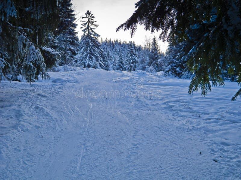Download Ski trail stock photo. Image of path, woods, freezing - 19865428
