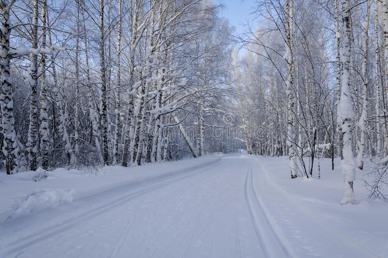 Ski trail in the winter forest stock photos
