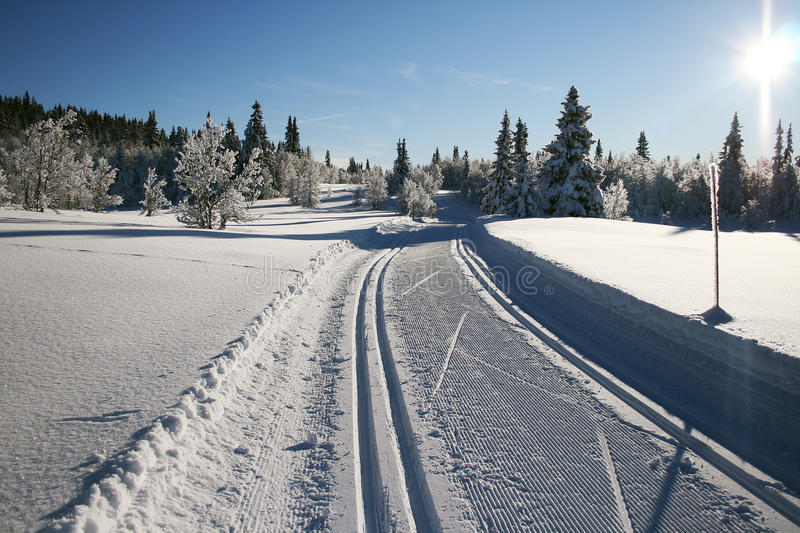 Download Ski trails stock photo. Image of cross, snow, tracks - 12855962