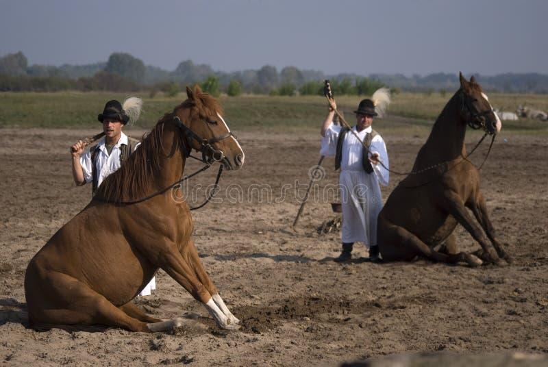 Skicklig ryttare Bugac, Ungern royaltyfria foton