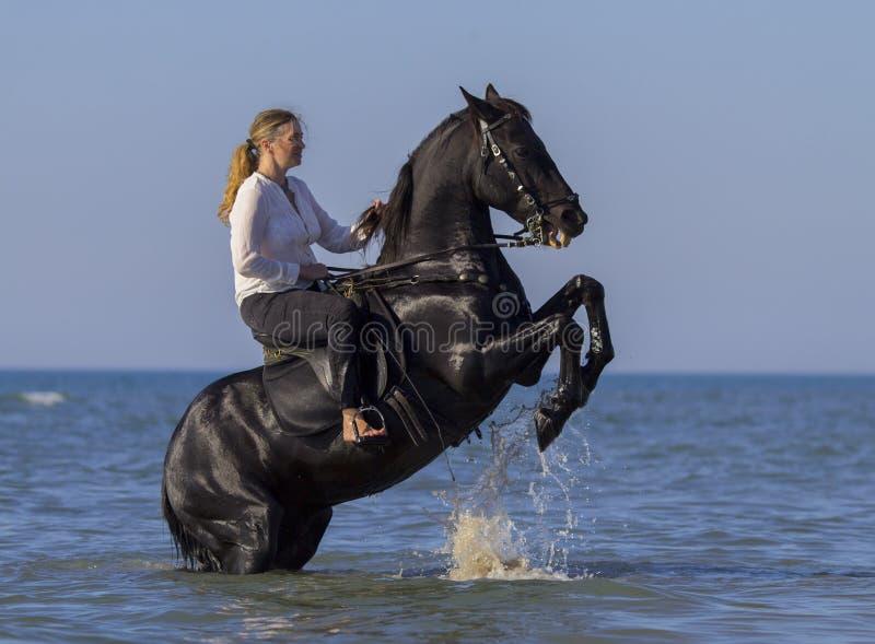 Skicklig ryttarinna på stranden royaltyfri fotografi