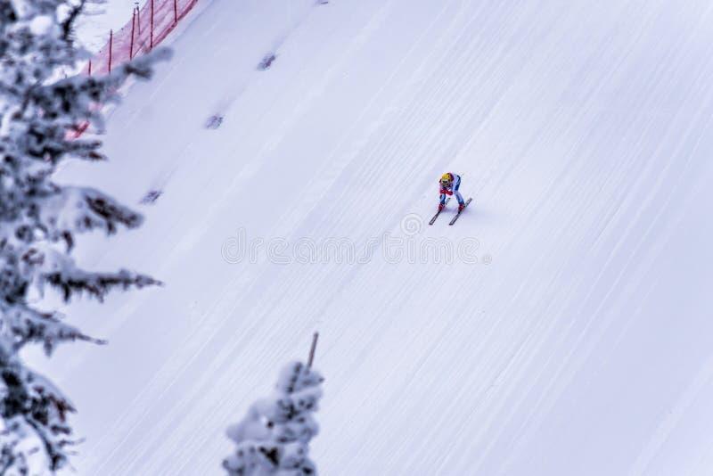 Skidåkaren som springer ner den branta hastighetsskidåkninglutningen på hastighetsutmaningen och FIS-hastighet Ski World Cup Race royaltyfria bilder